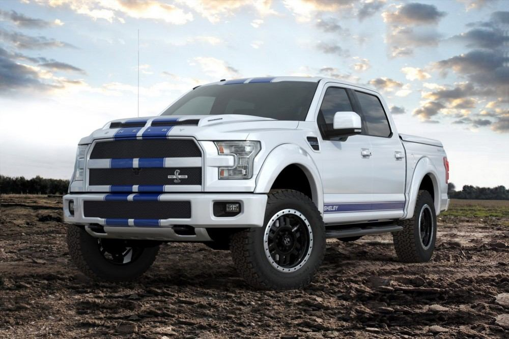 Shelby-15
