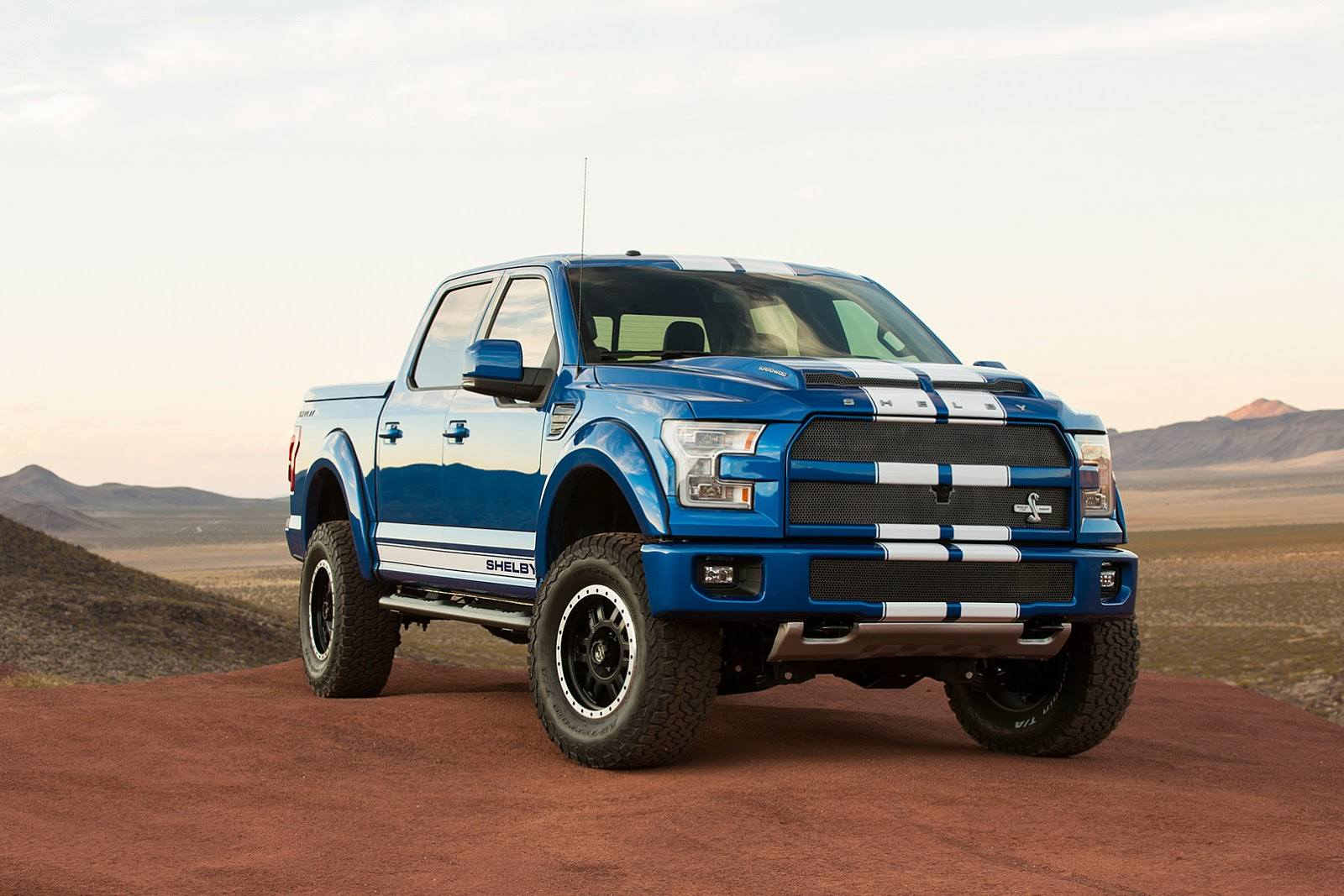Shelby-2